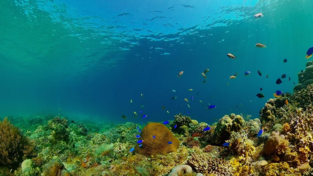 A picture containing nature, reef, swimming, ocean floorDescription automatically generated